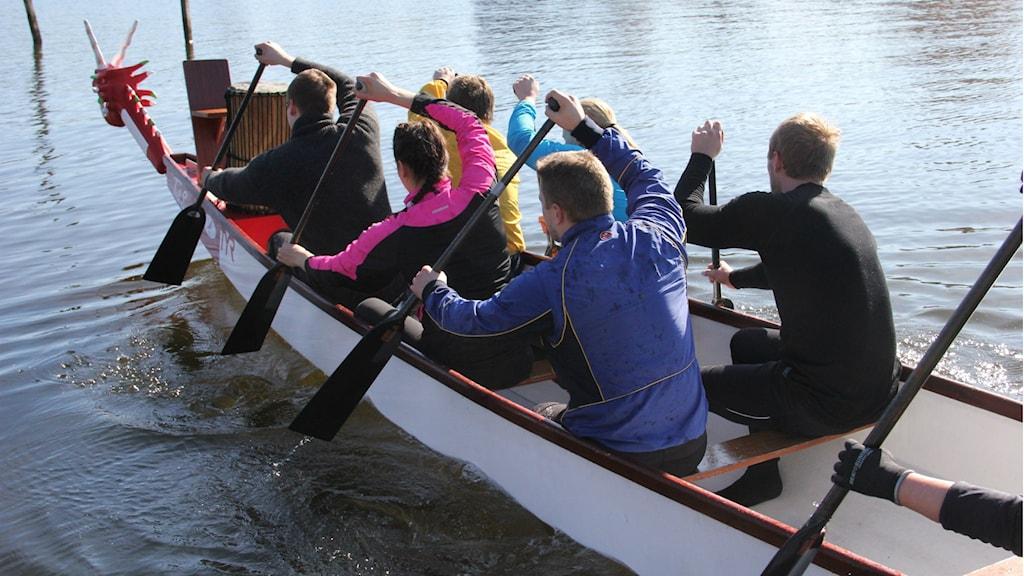 En drakbåt med paddlare inuti. Foto: Rebecka Gyllin/Sveriges Radio