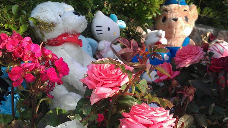 Minnesplatsen för den åttaåriga flickan med nallar, blommor och ljus. Foto: Stina Linde/Sveriges Radio