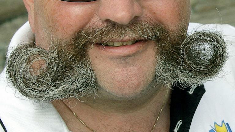 en stor grå mustasch