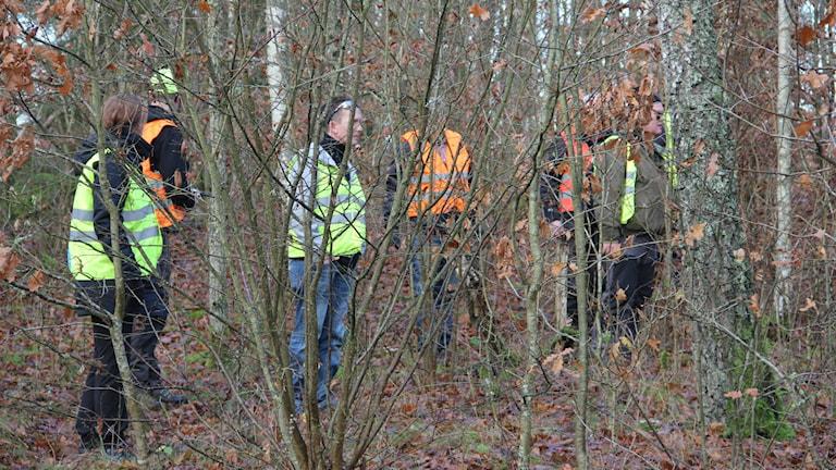 Sökandet gick bitvis genom väldigt snårig terräng. Foto: Mikael Eriksson/Sveriges Radio
