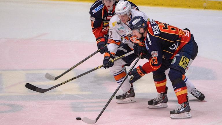 Tre hockeyspelare slåss om pucken. Foto: Bertil Ericson/Sveriges Radio