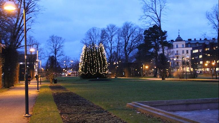 En julgran med ny belysning i Hoglands Park