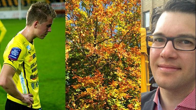 Ett kollage med bilder på Mjällby AIF, ett höstträd och Jimmie Åkesson. Foto: Sveriges Radio/TT