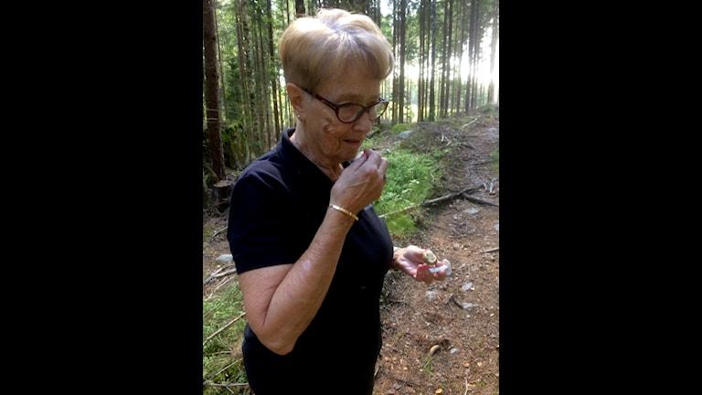 Mykolog Kerstin Eriksson ger sina tips till alla svampplockare.