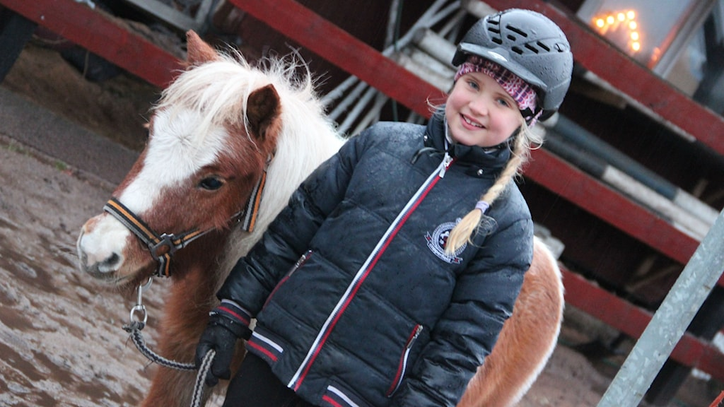 Elvira står bredvid en brun/vit liten ponny. Foto: Rebecka Gyllin/Sveriges Radio