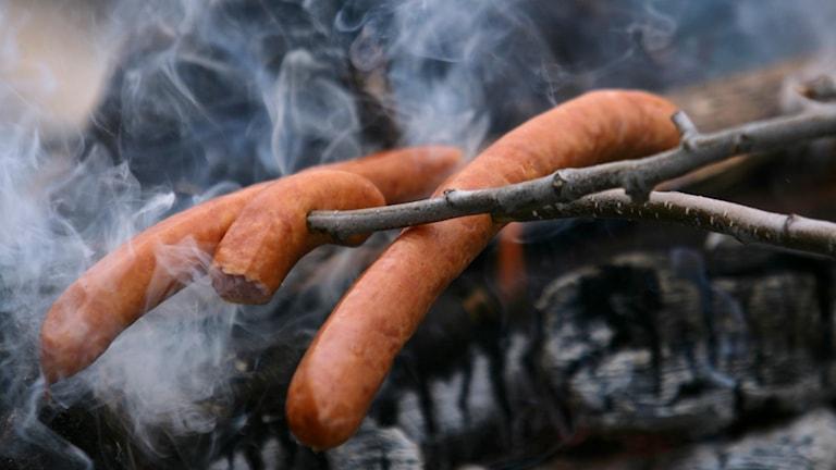 Korv som grillas över en eld. Foto: Fredrik Sandberg/TT