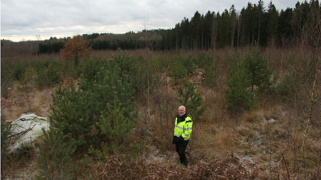 En man står vid en skog. Foto: Rebecka Gyllin/Sveriges Radio