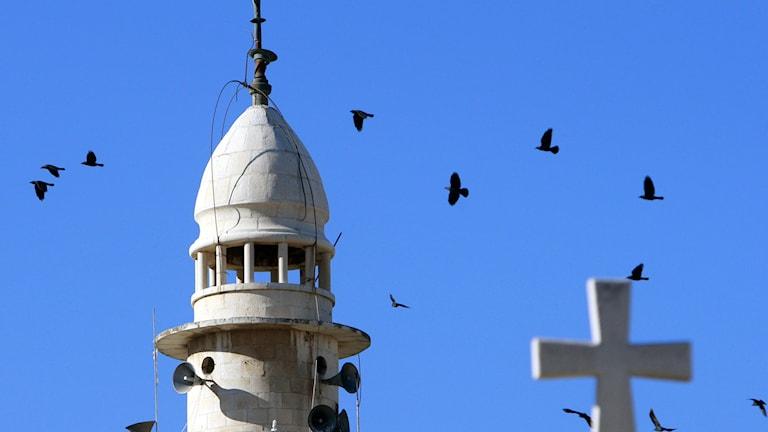 En minaret i Palestina som det flyger fåglar omkring. Foto:Mohammed Ballas/TT