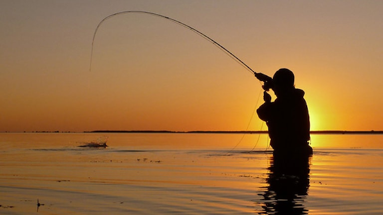 Flugfiskare i solnedgång vid havet.