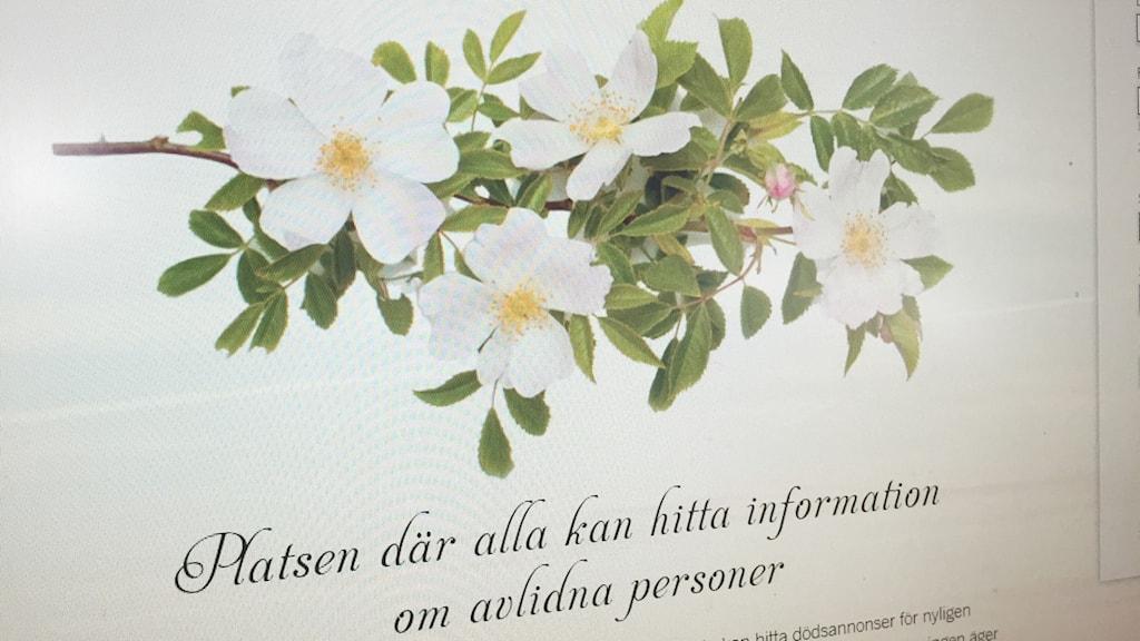 Bild på hemsida där man kan se dödsannonser på nätet. Foto:Sarah Rätzer / Sveriges Radio