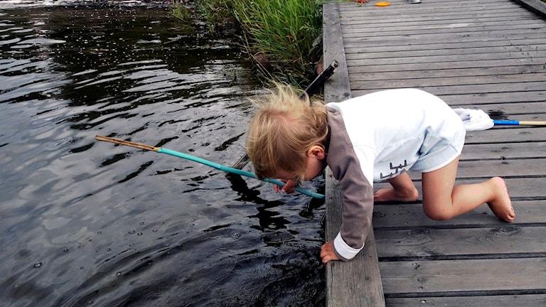 Barn leker på en brygga. Foto: Hasse Holmberg/TT