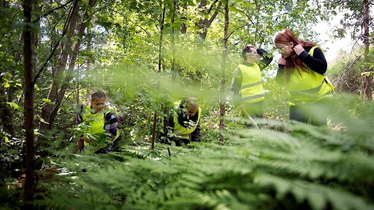 Missing people letar skogen. Foto: Björn Larsson Rosvall/TT.