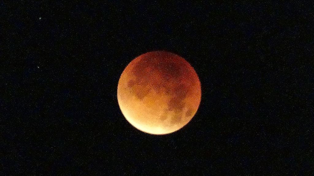 Blodröd måne. Foto: Lennart Lindell