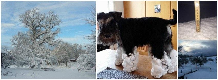 Ett collage med vintriga bilder från våra lyssnare.
