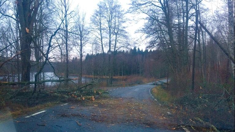 En väg med massa nedfallna träd. Foto: Lena König/Sveriges Radio.