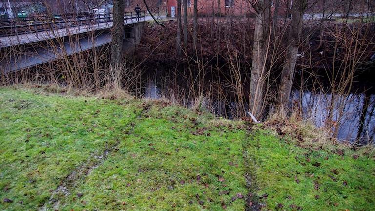 Hjulspår i gräsmattan leder ner till ån. Foto: Björn Hansson/Linslusfoto/TT.