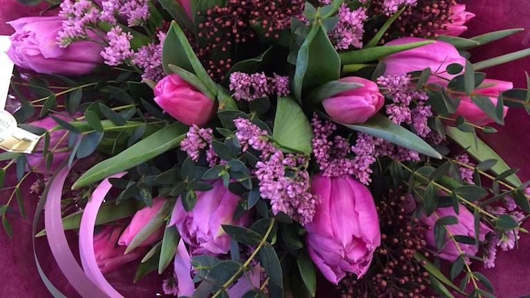 En lila tulpanbukett med grönt och lila emellan. Foto: Lena König/Sveriges Radio