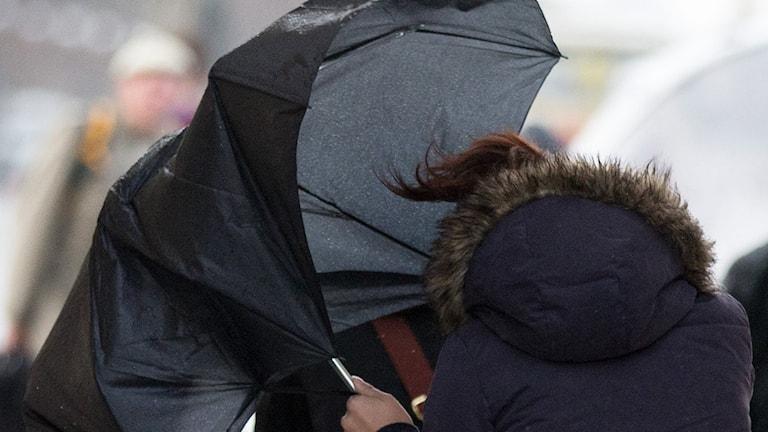 En person med ett svart paraply som håller på att blåsa iväg. Foto: TT.
