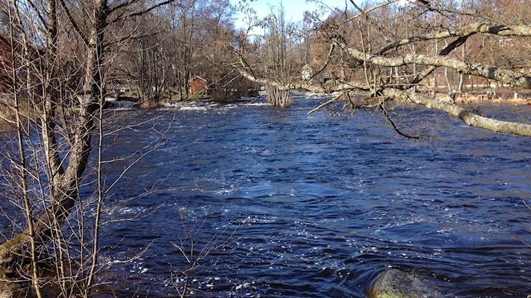 Mörrumsån, stor vattenmassa med många kala träd runt om.