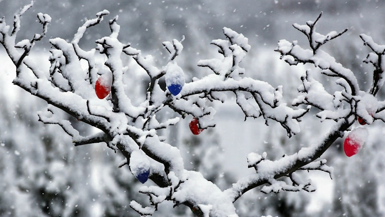 Påskägg i snötäckt träd