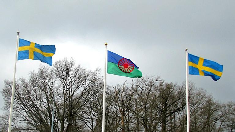 Tre flaggor vajar mot en grå himmel, två svenska och i mitten den romska flaggan.