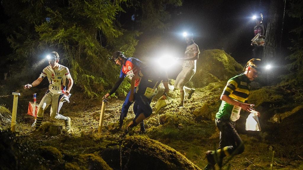 Nattorienterare med pannlampor som lyser åt olika håll vid en kontroll i skogen.