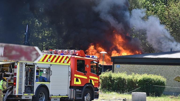 Väl utvecklad brand i Asarum.