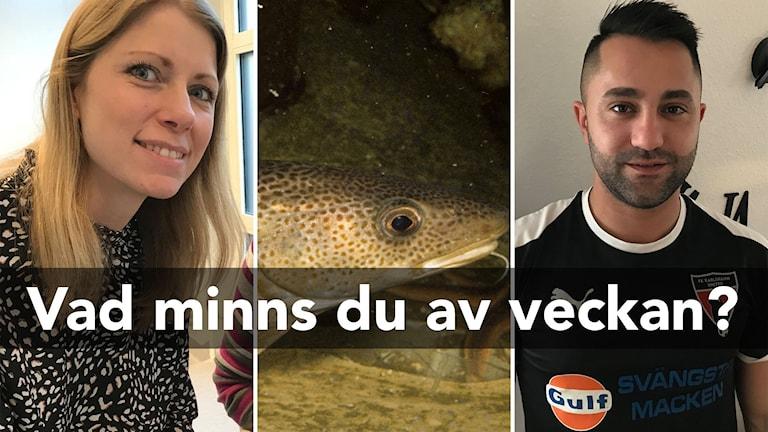 En bild för nyhetsquizet. Tre bilder från veckans nyheter, en glad kvinna, en torsk och en man.