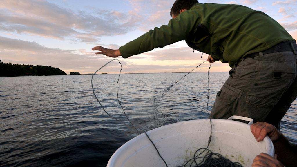 Fiskare som slänger ut ett nät i skymningen.