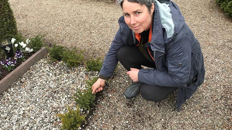 Marianne Höglund Hvilan Karlshamn med nyplanterade idegransplantor