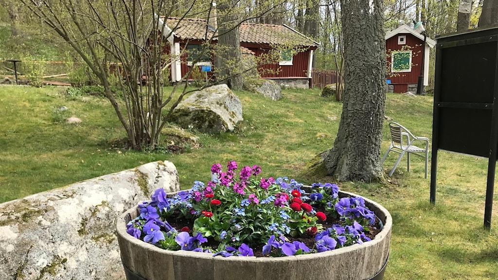 Plantering med blommor