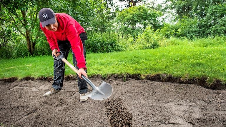 sommarjobbare gräver