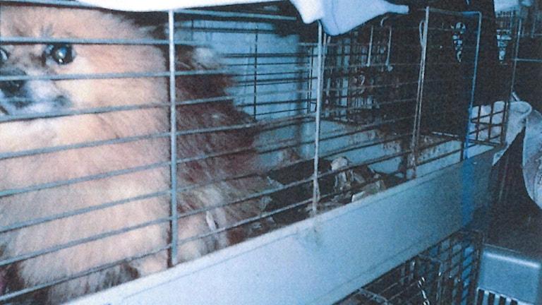 Hund i bur.