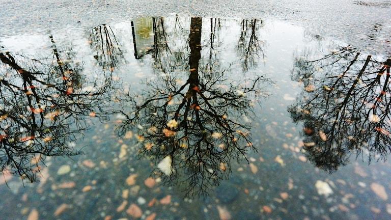 vattenpöl med höstlöv och träd som speglar sig