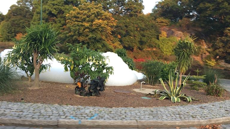 Rondell med växter och fontän där skum höjer sig över vattnet.