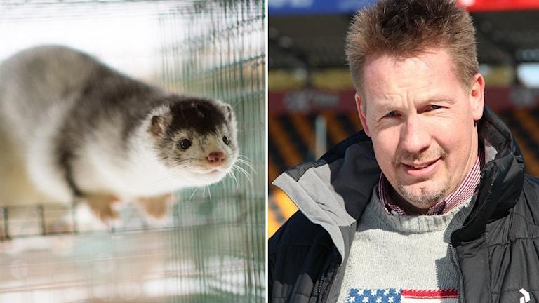 Jörgen Martinsson blir nygammal VD för Svensk mink.