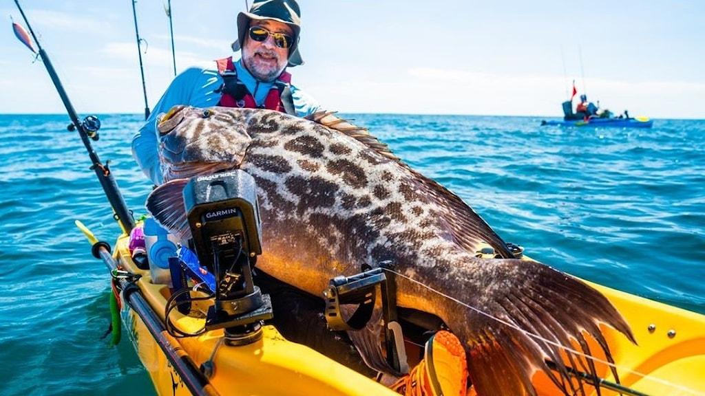 En man i en fiskebåt håller i en jättestor fisk.