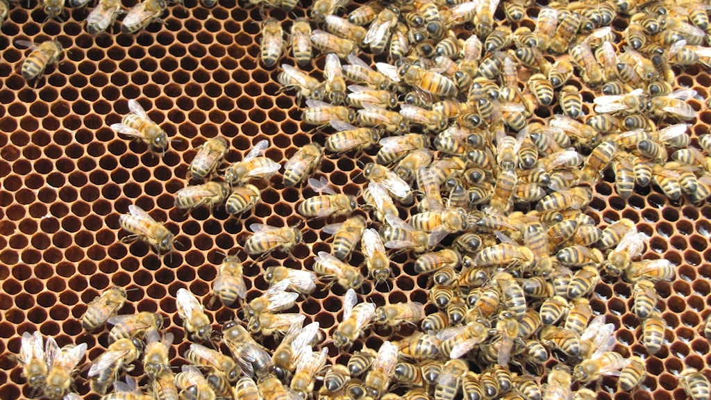 Massa bin på en honungskaka