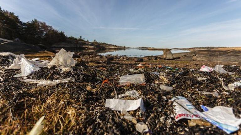 Fullt med plastskräp blandat med sjögräs på en strand och en klarblå himmel.