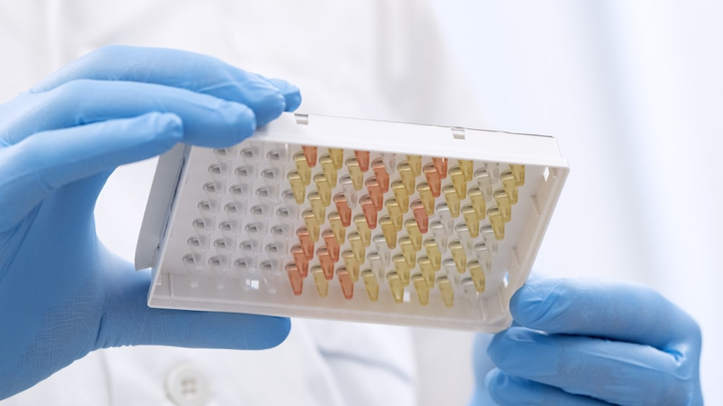 En testplatta med coronavirusprover som används i den metod för att testa personal som har corona /covid-19