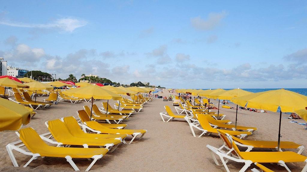 rader av tomma solstolar på en strand i spanien.