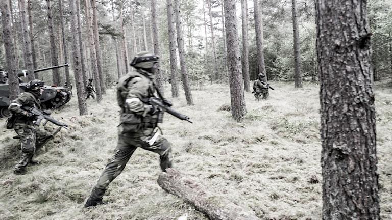 Militärövning, soldater i skog.