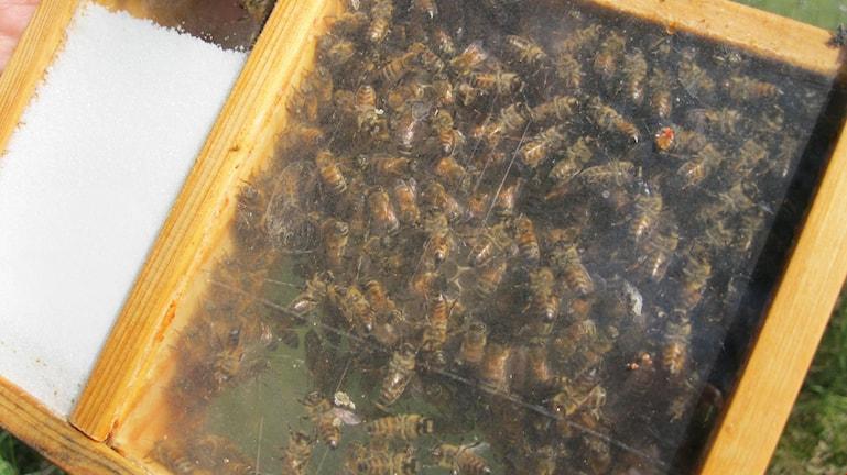 Kassett för transport av bin Hasslö