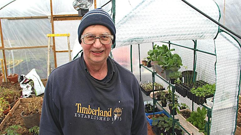 Porträttbild av Lars Karlsson som står i sitt tunnelväxthus som även rymmer en växtkuvös.