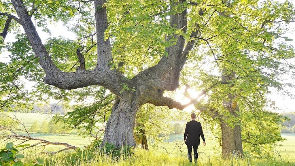 ryggen på Carin Collin bredvid ett stort träd i solljus.
