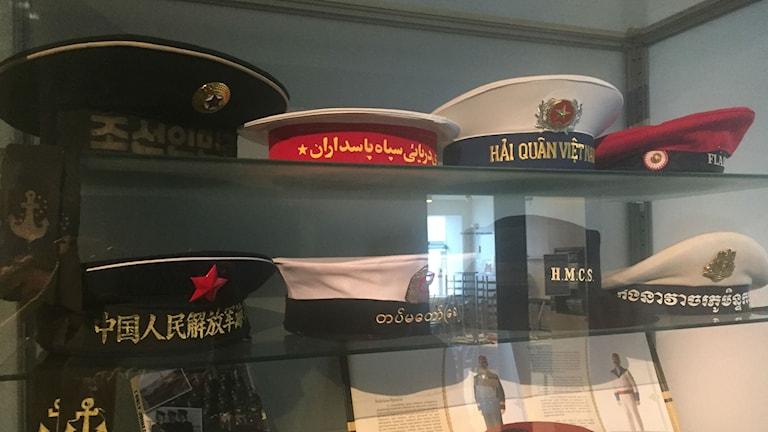 Monter med marina rundmössor på Marinmuseum.