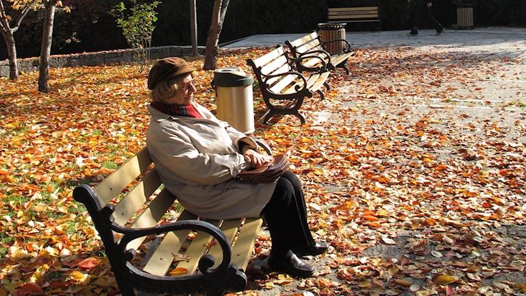 pensionär på parkbänk i höstsol