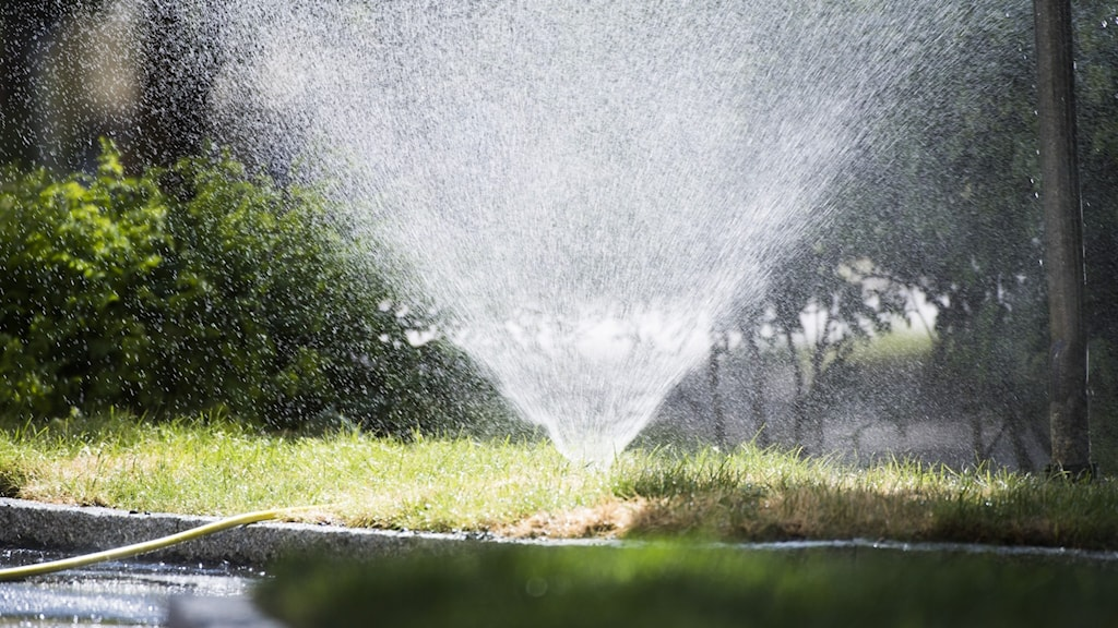 Vattenspridare vid gräsmatta och buskar.