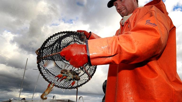 Anders Carlén fiskar kräftor i Vättern.