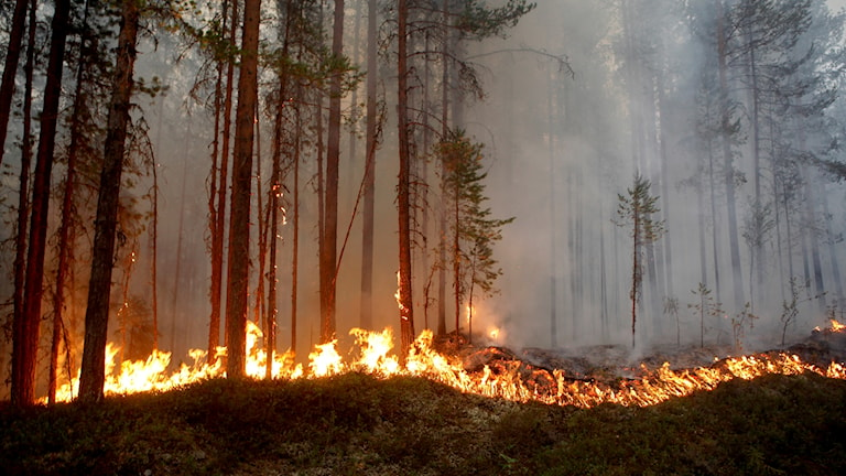 Det brinner i skogen.